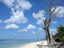 Cozumel Island Shore Stock Photography