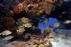 Cozumel Reef Stock Photos