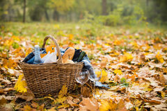 Cozy autumn picnic. Basket with a blanket, coffee, food, wine and glasses on yellow autumn leaves. A cozy autumn picnic in the park, a warm autumn day Royalty Free Stock Photography