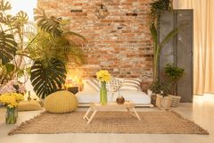 Cozy botanic room. Cozy botanic style living room with sofa and big plants royalty free stock photo