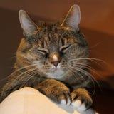 Cozy cat Stock Photos