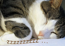 Cozy and content - the family cat sleeping soundly on his pillow Stock Image
