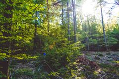 Cozy and dense summer forest. Shadows and sunshine. Beautiful day. Germany. Cozy and dense summer wood. Shadows and sunshine royalty free stock photos