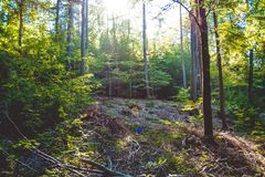 Cozy and dense summer forest. Shadows and sunshine. Beautiful day. Germany. Cozy and dense summer wood. Shadows and sunshine stock photos