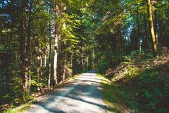 Cozy and dense summer forest. Shadows and sunshine. Beautiful day. Germany. stock images