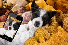Cozy dog in bed with teddy bears royalty free stock photos