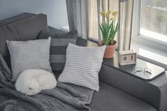 Cozy family room with brown couch. Sleeping cat and large windows showing  spring landscape at sunny day Stock Image