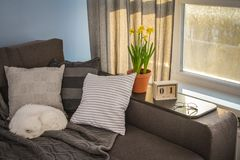 Cozy family room with brown couch. Sleeping cat and large windows showing  spring landscape at sunny day Stock Photography