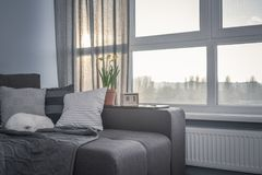 Cozy family room with brown couch. Sleeping cat and large windows showing  spring landscape at sunny day Royalty Free Stock Images