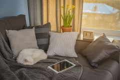 Cozy family room with brown couch. Sleeping cat and large windows showing  winter landscape on sunset Stock Photo