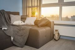 Cozy family room with brown couch. Sleeping cat and large windows showing  winter landscape on sunset Stock Photos