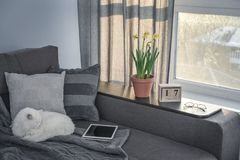 Cozy family room with brown couch. Sleeping cat and large windows showing  winter landscape at sunny day Royalty Free Stock Photography