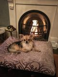 Cozy by the fireplace stock photography