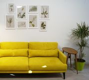 Cozy green sofa and frame with herbarium royalty free stock photography