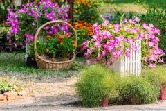 Cozy home flower garden on summer. Stock Photos