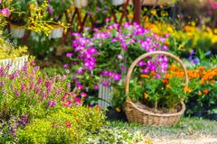 Cozy home flower garden on summer. Royalty Free Stock Images