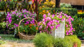 Cozy home flower garden on summer. Royalty Free Stock Photography