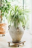 Cozy home interior design with house plants at window. Living room plants stock photo
