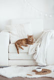 Cozy interior details. Still life interior details, cup of coffee and a book near white cozy chair Royalty Free Stock Images