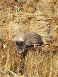 COZY KITTEN IN A HAY BALE ON A FARM. THERE`S NO PLACE LIKE HOME. HAPPY KITTEN IN A HAY BALE ON A FARM. THE BEST LIFE EVER. FREE TO BE WHO YOU ARE. A SIMPLE LIFE Royalty Free Stock Photos