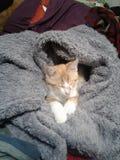 Cozy little kitten stock photos