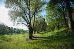 Cozy lake shore in the spring Royalty Free Stock Image