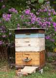 Cozy Old Colorful Beehive in the Garden and Aster Amellus Flowers. Background in Autunm Stock Photography