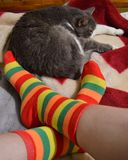 Cozy photo: a cat, a warm blanket and striped socks. The best night in the cooler seasons - get a warm blanket in the bright striped socks in the company of your Stock Image