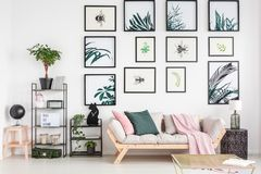 Cozy sofa in living room. Cozy sofa in an elegant, living room interior embellished with a variety of nature posters Royalty Free Stock Image