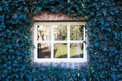 Cozy white little window with blue leafs on the wall fantasy spring season Stock Images