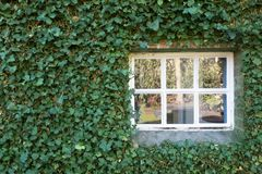 Cozy white little window with green leafs on the wall spring season Royalty Free Stock Photo