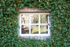 Cozy white little window with green leafs on the wall spring season Stock Photos