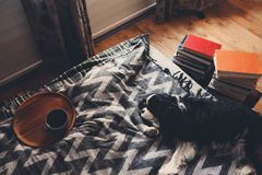cozy winter home with dog sleeping on bed on warm blanket, book and cup of tea. royalty free stock photo