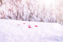 Cozy winter nature scene with snow Stock Images
