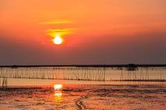 Cozza che coltiva al tramonto Immagini Stock Libere da Diritti