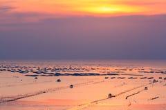 Cozza che coltiva al tramonto Fotografia Stock
