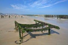 Cozze coltivate sui bouchots dei pali sulla spiaggia con il cappuccio Gris Nez nei precedenti, ` Opale, passo di danza de Calais, Fotografia Stock Libera da Diritti