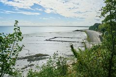 Cozze coltivate sui bouchots dei pali sulla spiaggia vicino al marinaio Immagine Stock Libera da Diritti