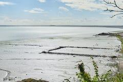 Cozze coltivate sui bouchots dei pali sulla spiaggia vicino al marinaio Fotografie Stock Libere da Diritti