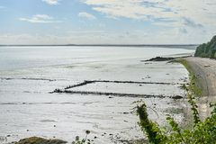 Cozze coltivate sui bouchots dei pali sulla spiaggia vicino al marinaio Fotografia Stock