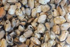 Cozze congelate sul mercato ittico, vista dalla cima, misure come fondo immagine stock libera da diritti