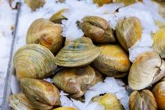 Cozze fresche sul mercato dell'agricoltore del pesce pronto per la vendita e l'uso per l'ingrediente Fuoco selettivo Fotografie Stock Libere da Diritti
