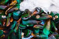 Cozze verde smeraldo Sopra un certo ghiaccio Immagini Stock