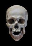 Cráneo Fotos de archivo libres de regalías