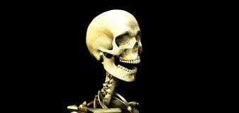 Cráneo 20 Foto de archivo