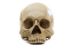 Cráneo Fotos de archivo