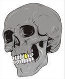 Cráneo Imagen de archivo libre de regalías