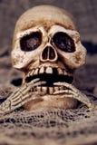Cráneo Foto de archivo