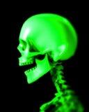 Cráneo 48 Imágenes de archivo libres de regalías