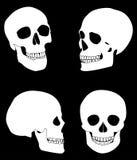 Cráneo Ilustración del Vector